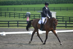 Maverick Dressage