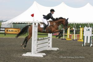 Maverick Novice Show Jumping